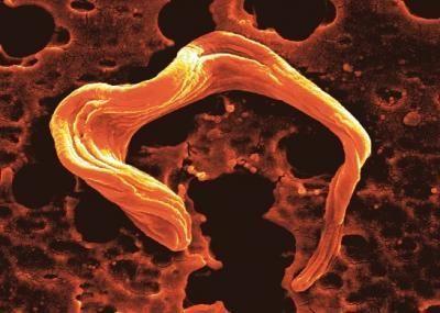 Parasite Trypanosoma brucei
