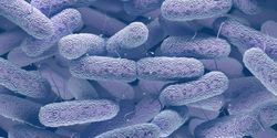 Speedy Antibiotic Susceptibility Tests for High-Priority Pathogens