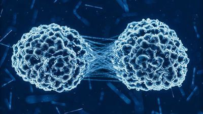 New Diagnostic Method Predicts Who Will Respond to Immunotherapy