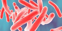 New Imaging Method Reveals If Antibiotics Reach Bacteria inside Tissues
