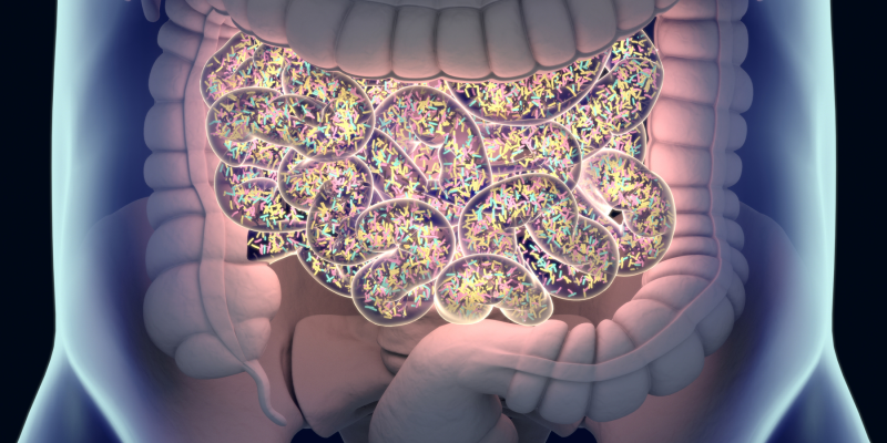 Landmark Clinical Trial Reveals Link between Gut Microbes, Diet, and Illness