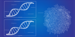 New, Simplified Genetic Test Effectively Screens for Hereditary Cancers