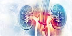 Study Examines Role of Biomarkers to Evaluate Kidney Injury in Cancer Patients