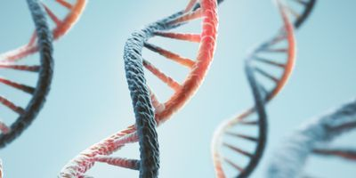 Researchers Develop Test to Measure Effect of Breast Cancer Gene Variants