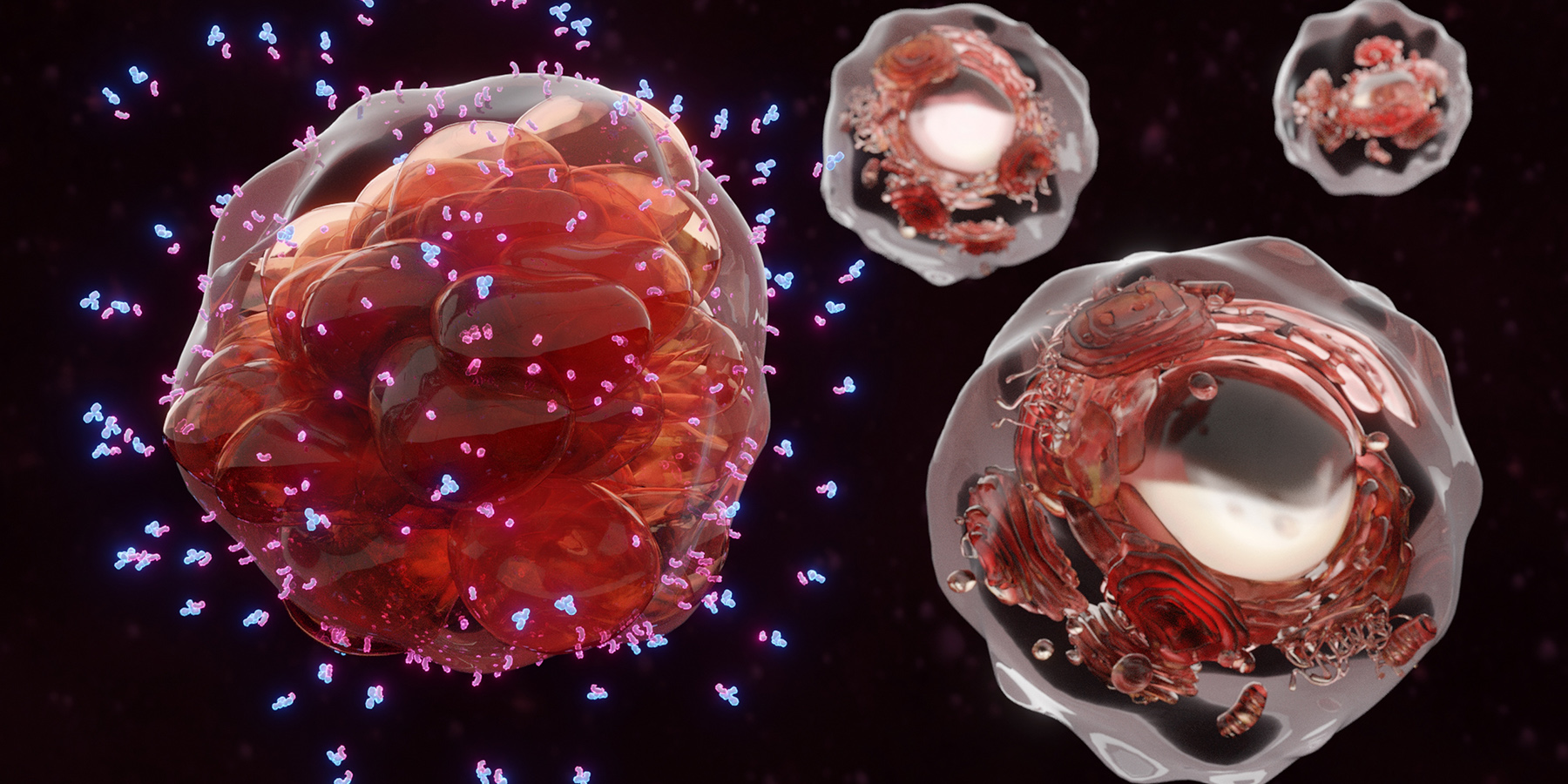Identifying New Cell Types Accelerates Cancer Immunology