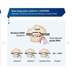 CRISPR Discovery Paves the Way for Novel COVID-19 Testing Method