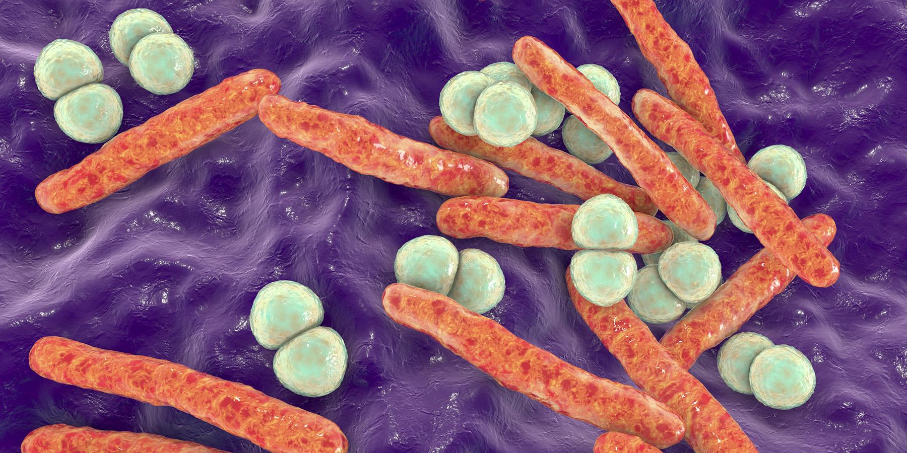 Identifying the Rise of Multidrug Resistant <em>E. coli</em>