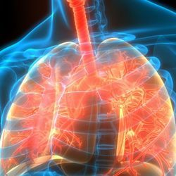 How COVID-19 Wreaks Havoc on Human Lungs