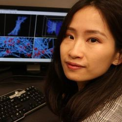 A Breakthrough in the Physics of Blood Clotting