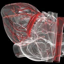 Some Patients with Unexplained Sudden Cardiac Death Have Suspicious Gene