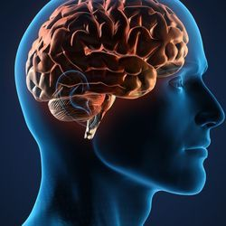Omega-3s May Hold Key to Unlocking Blood-Brain Barrier