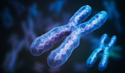 Optimal Genome Mapping Could Revolutionize Cytogenetics