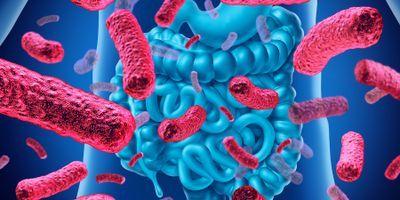 Mayo Researchers Link Gut Microbiome to Rheumatoid Arthritis Prognosis