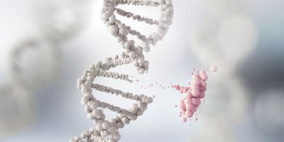 Insights from Our Genome, Epigenome Will Help Prevent, Diagnose, Treat Cancer